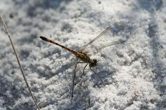 a picture of an insect in winter_ Hibernation in tiny animals like insects involves a process called Diapause
