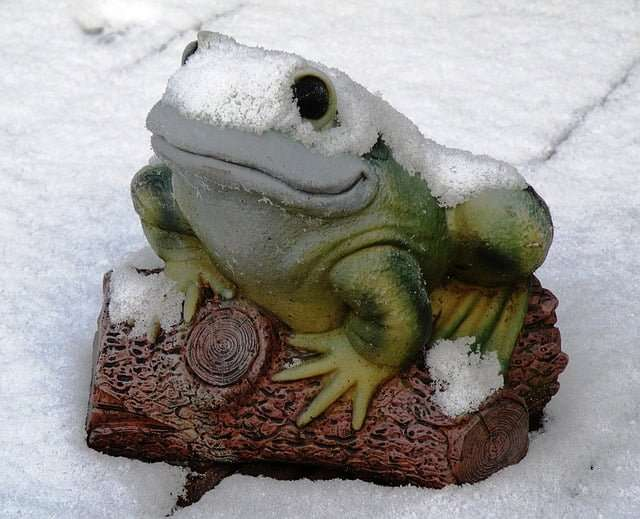 a picture of a frog during winter